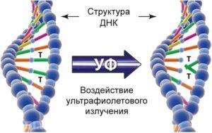 kak-vybrat-kvartsevye-lampy-dlya-doma-obzor-lamp-tseny-otzyvy-34567654345